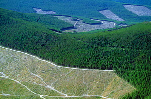Aerial view of clearcut areas surrounded by uncut coniferous forests, USA.  -  Visuals Unlimited