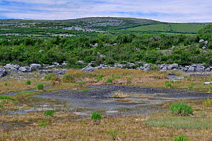 Turlough / seasonal lake  - starting to dry out in summer. The Burren, County Clare, Ireland, June 2010  -  Adrian Davies