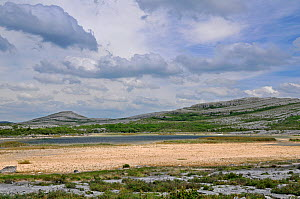 Turlough / seasonal lake starting to dry out in summer. The Burren, County Clare, Ireland, June 2010  -  Adrian Davies