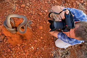 Researcher Guido Westhoff photographing an olive python (Liasis olivaceus) on a termite mound. Queensland, Australia, February 2008 - Jurgen Freund