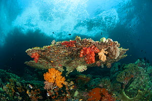 Colorful coral reef with soft corals (Alcyonacea) and fan corals (Gorgonacea). Misool, Raja Ampat, West Papua, Indonesia, January - Jurgen Freund