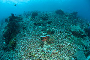 Old coral reef destroyed by dynamite fishing. New corals are not able to colonise the rubble. Misool, Raja Ampat, West Papua, Indonesia, January 2010 - Jurgen Freund