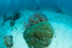 Vandalism underwater - names etched onto hard corals at a manta cleaning station by bored dive guides waiting for rays to appear. North Raja Ampat, West Papua, Indonesia, February  -  Juergen Freund