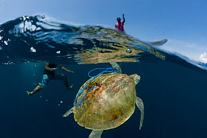 Local fishermen capturing a sea turtle for food, Kei islands, Moluccas, Indonesia, November 2009  -  Jurgen Freund