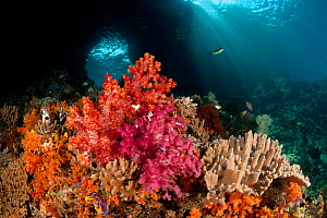 Swim-through at dive site called Boo with colourful corals in the foreground. Misool, Raja Ampat, West Papua, Indonesia - Jurgen Freund
