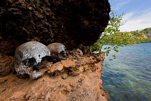 Very old human skulls on a ledge in the karst limestone walls of a Raja Ampat island. Raja Ampat, West Papua, Indonesia, February 2010  -  Jurgen Freund