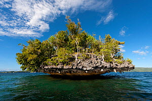 Small, tree-covered island. This is a karst limestone formation with layers eaten away by water. Raja Ampat, West Papua, Indonesia, February 2010.  -  Jurgen Freund