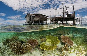 Split-level shot of a shallow coral reef and house on stilts. North Raja Ampat, West Papua, Indonesia, February 2010  -  Jurgen Freund
