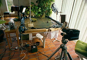 Equipment used by Stephen Dalton for photographing leaping leopard frog.  Camera, flashes and mock-up of water habitat is shown. UK.  -  Stephen Dalton