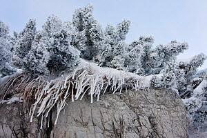 Frost and windblown snow on vegetation. Belianske Tatry, Slovakia, November.  -  Bruno D'Amicis