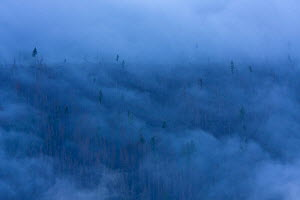 Clouds above mountain forest. Western Tatras, Slovakia, June 2009. - Bruno D'Amicis