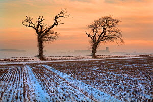 Snow on stubble field at dusk with Southrepps Church in the background, North Norfolk, UK, Winter  -  Ernie Janes