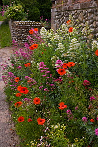Gateway to a cottage garden in summer with flowering Poppies and Valerian, Salthouse, Norfolk, UK, June - Ernie Janes