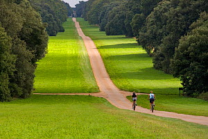 Two people cycling down the drive at Holkham Park, Norfolk, UK - Ernie Janes