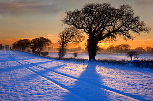 Snow covered arable field with Oak trees creating long winter shadows at dawn, Southrepps, Norfolk, UK - Ernie Janes
