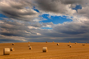 Stubble and round straw bales after harvest, Cley, Norfolk, UK, July - Ernie Janes