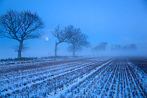Moon rising over winter landscape, stubble field and Oak trees, Gimingham, Norfolk, UK, - Ernie Janes
