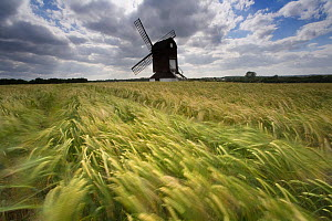 Ancient Windmill in barley field at Pitstone, Bedfordshire, UK - Ernie Janes