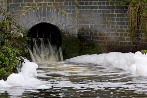 Foam caused by pollution in the Grand Union canal at Berkhamsted, Hertfordshire, UK  -  Ernie Janes