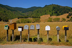 Rural letter boxes on side of road in South Island, New Zealand  -  Ernie Janes