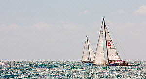"""Bloody Mary"" racing in the sun at the Grenada Sailing Festival, Caribbean, January 2010. - Onne van der Wal"