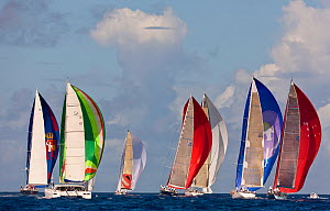 Fleet racing under colourful spinnakers during the Heineken Regatta, St Martin, Caribbean, March 2011.  -  Onne van der Wal