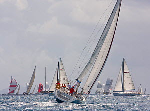 Fleet in the sun during the Heineken Regatta, St Martin, Caribbean, March 2011.  -  Onne van der Wal