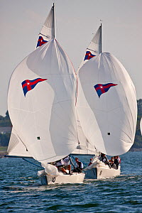 Sonars and Shields racing in the New Invitational Qualifying Regatta. Newport, Rhode Island, September 2010.  -  Onne van der Wal