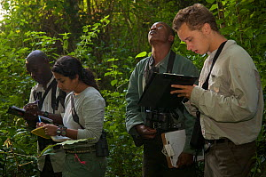 Simon Townsend, PhD student (University of St. Andrews) and field assistant Monday Gideon, Zarin Machanda, PhD student (Harvard University) and Senior field assistant Geresomu Muhumuza observing chimp...  -  Florian Möllers