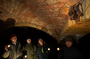 Bat expert Karsten Kallasch (far left) and co-workers observing Greater mouse-eared bats (Myotis myotis) hibernating amongst the sand filters of Tegel water works, Berlin, Germany. January 2006  -  Florian Möllers