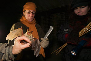Research workers with Greater mouse eared bat (Myotis myotis) hibernating amongst the sand filters of Tegel water works, Berlin, Germany. January 2006  -  Florian Möllers