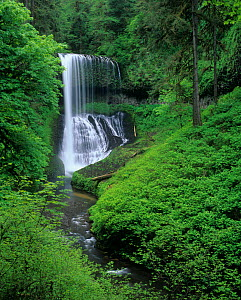 Middle North Falls, Silver Falls State Park, Oregon, USA.  -  Visuals Unlimited