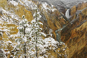 Lower Yellowstone Falls and the Grand Canyon of the Yellowstone after an autumn snowfall, Yellowstone National Park, Wyoming, USA.  -  Visuals Unlimited