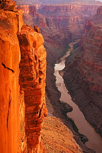 The Colorado River courses through Grand Canyon National Park at sunrise as viewed from Toroweap Overlook, over 3000 ft above the Colorado River. Arizona, USA. - Visuals Unlimited