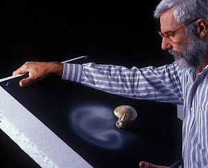 Photographer Yves Lanceau in his studio studying the spore dispersal pattern of the False Death Cap fungus (Amanita citrina var. alba)  -  Yves Lanceau