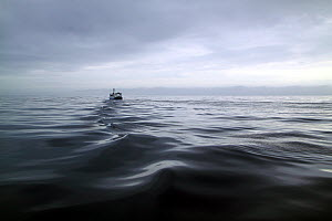 Trawler leaving ripples in its wake as it heads for fishing grounds on a calm day on the North Sea, Europe, April 2011. Property released.  -  Philip Stephen