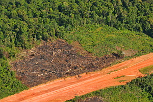 Aerial view of logging area by a dirt road in primary forest. French Guiana, August 2008.  -  Daniel Heuclin