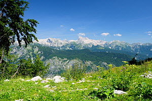 View of the highest peaks in the Julian Alps including Mount Triglav (2864m) from 1535m at the top of the Vogel cable car lift, Triglav National Park, Slovenia, July 2010. - Nick Upton