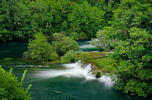 Overview of waterfalls on the Mreznica river, overhung by deciduous trees, Zvecaj, Karlovacka, Croatia, July 2010.  -  Nick Upton