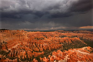 A thunderstorm drops heavy rain over the hoodoo sandstone formations. Bryce Canyon National Park, Utah, USA, August.  -  David Welling