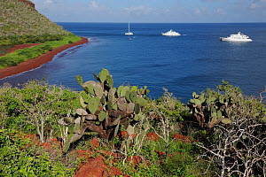 A view of a bay on Rabida Island with Prickly Pear (Opuntia vulgaris) in the foreground and three yachts. Galapagos, Ecuador, April. - Staffan Widstrand