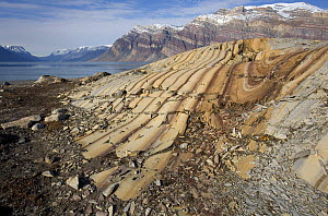 Glaciers have smoothed these folded sedimentary rocks, dated to the Cambrian and late pre-Cambrian. Segels�llskapets Fjord, northeast Greenland National Park, September 2008.  -  Troels Jacobsen/Arcticphoto