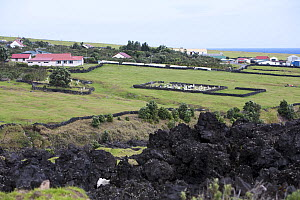 Houses and the cemetery in Edinburgh of the Seven Seas with solidified lava in the foreground. Tristan da Cunha, South Atlantic Islands, March 2007. - Troels Jacobsen/Arcticphoto