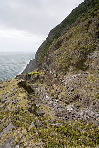 A rocky path following a mountainside. Tristan da Cunha, South Atlantic Islands, March 2007. - Troels Jacobsen/Arcticphoto