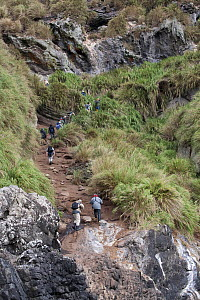 Visitors climb the steep paths on Nightingale Island. Tristan da Cunha group, south Atlantic, March. - Troels Jacobsen/Arcticphoto