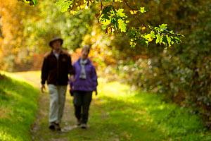 Couple walking down path through woodland, The National Forest, Central England, UK, November 2010 - Ben Hall / 2020VISION