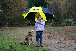 Child with umbrella and Lakeland Terrier x Border Collie (Canis familiaris) bitch. NOT AVAILABLE FOR BOOK USE - Mark Taylor