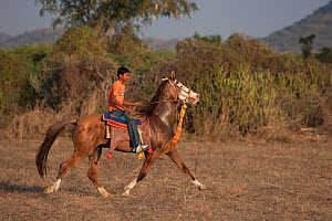 Young boy riding a Kathiawari mare, in reval (a natural lateral pace), Gujarat, India, January 2011 - Kristel Richard