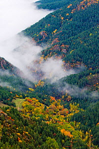 A high view of mist shrouding an autumnal valley. Cadi Natural Park, Catalonia, Barcelona province, Pyrenees, Spain, October 2005. - Inaki Relanzon