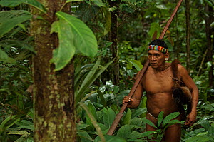 Huaorani man returning from a hunt with his primate (woolly monkey) bushmeat. Gabaro Community, Yasuni National Park, Ecuador, June 2007. Model release #GA02.  -  Pete Oxford